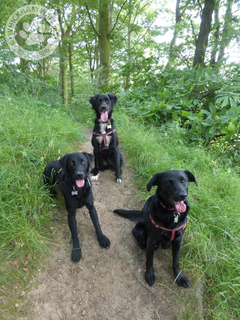 Settling in nicely into a trio walk at the Derwent