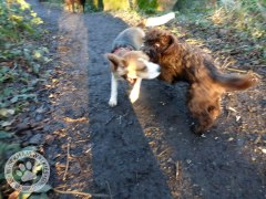 jan06walkies11