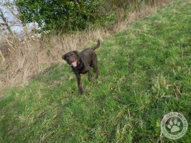 09janwalkies9